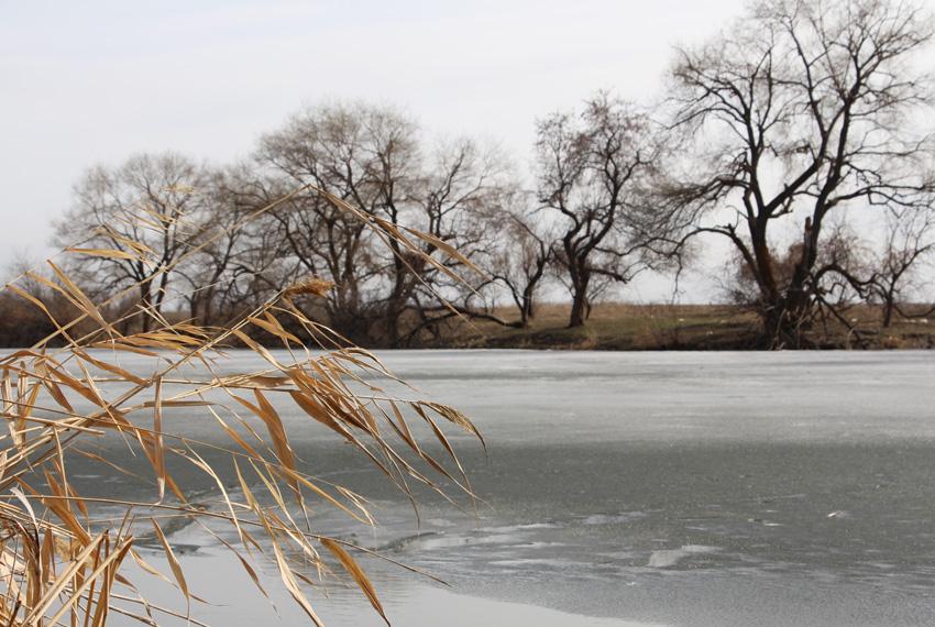 камыш и ледяной пруд
