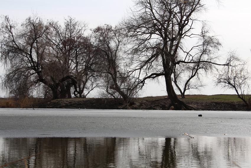 лёд, вода, деревья на берегу