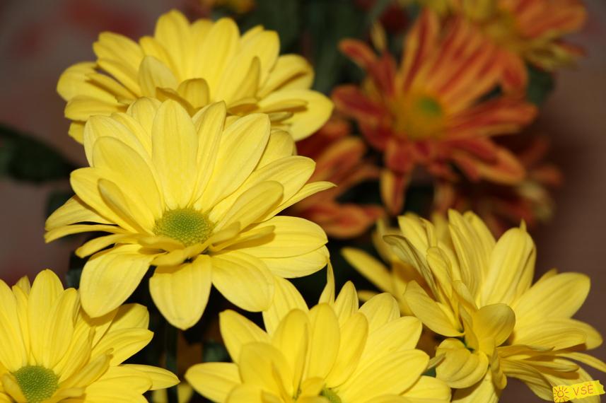 цветы, подаренные мне мужем
