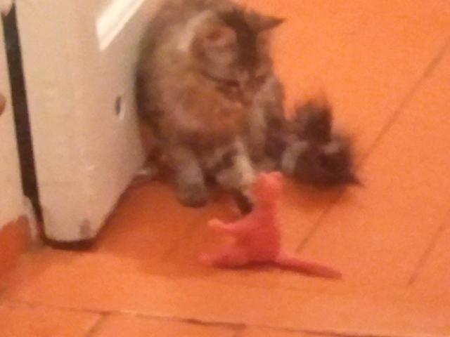 Соня играет с вязанной кошкой