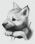 Фотография Добрый Волк