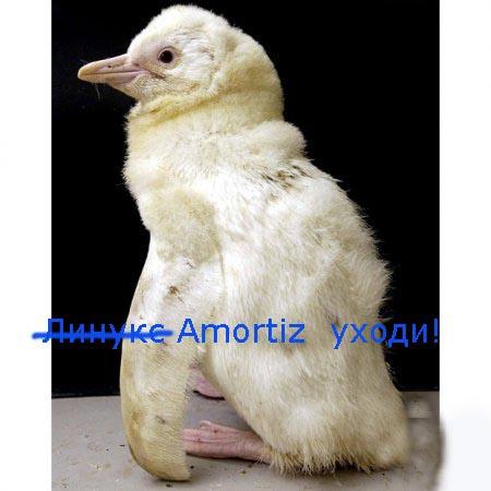 1262858062_albino_penguin______.jpg
