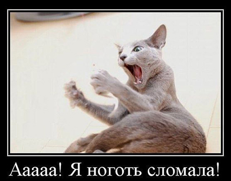 post_181272_1382958177.jpg