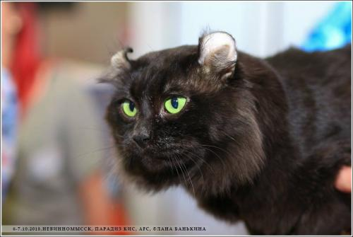 Exclusive Cats First Style Gimmy, 6 years-n.jpg