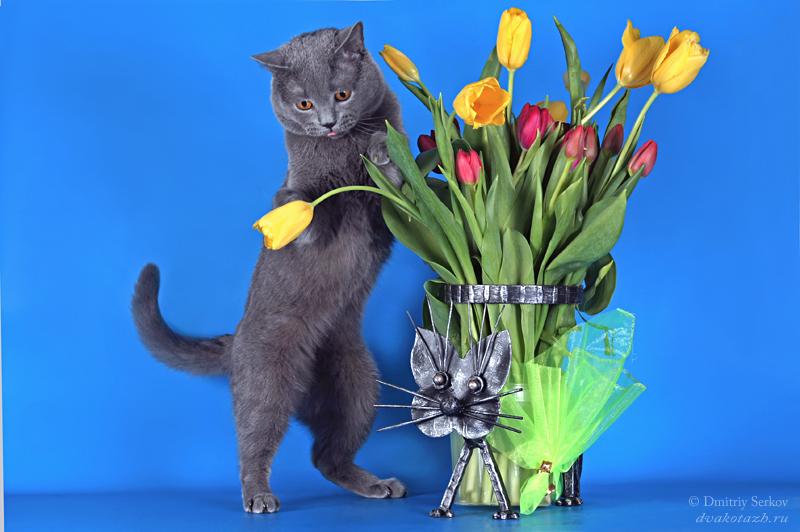 С 8 марта открытка с кошкой, дмитрию
