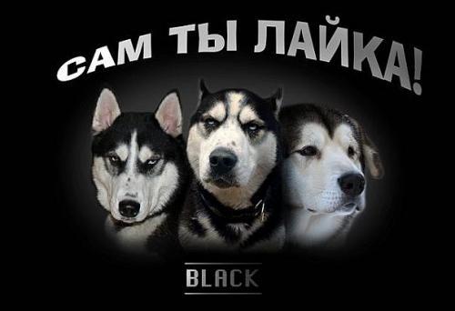 Хаски Post-21706-1302675558_thumb