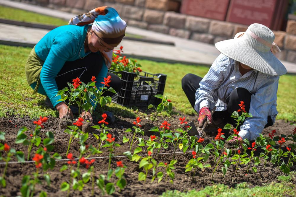 Что за цветы сажают в парках 855