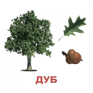 derevia-bolshie-2.jpg