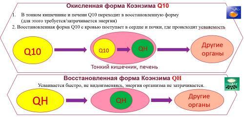 qh13.jpg