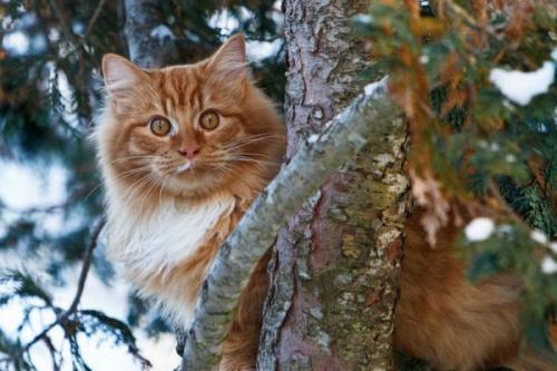 cats_010.jpg