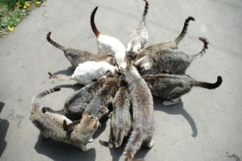cats_030.jpg