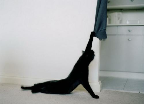 cats_060.jpg