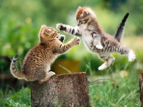 cats_080.jpg