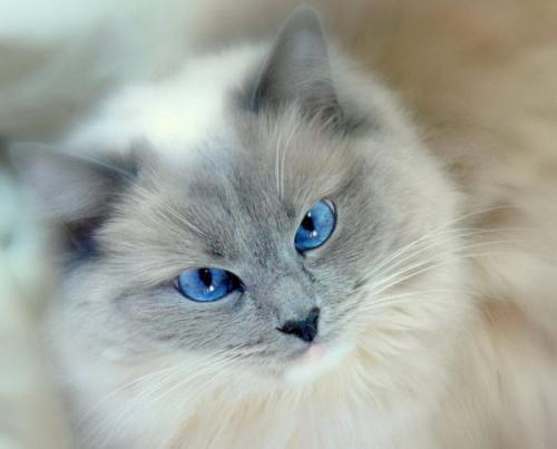 cats_100.jpg