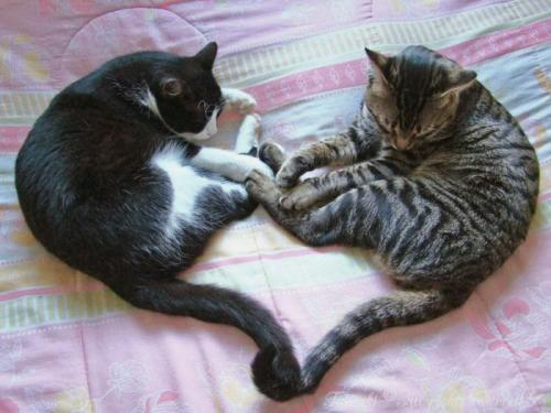 cats_120.jpg
