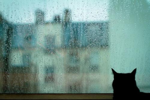 cats_130.jpg