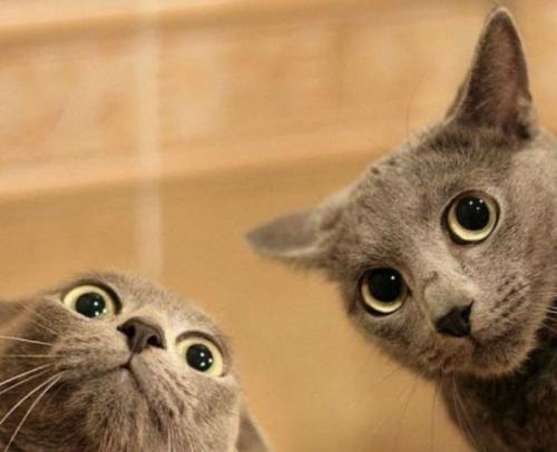 cats_140.jpg