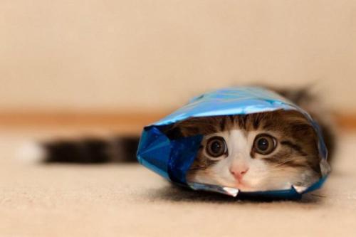 cats_160.jpg