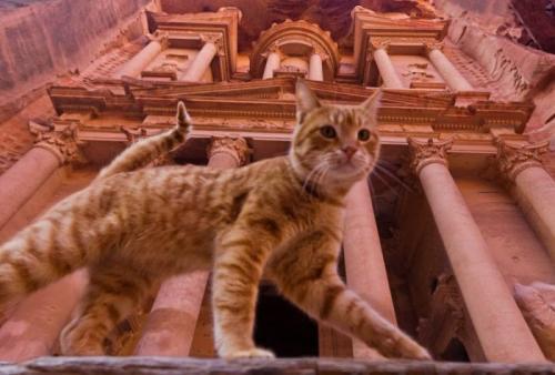 cats_230.jpg