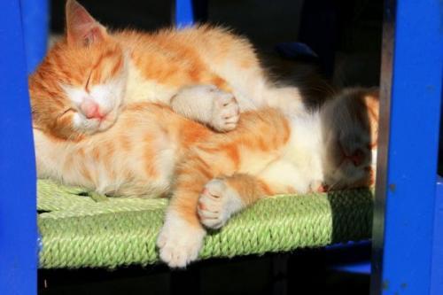 cats_240.jpg