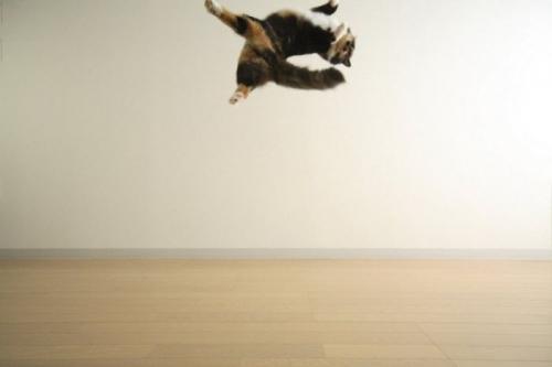 cats_260.jpg