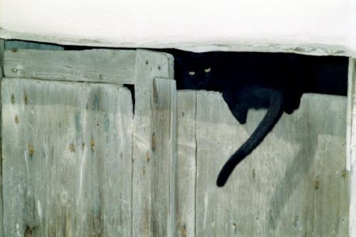 cats_270.jpg