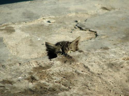 cats_280.jpg