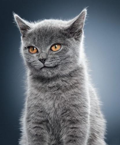 cats_290.jpg