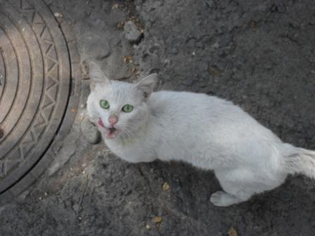 бел_котиша.JPG