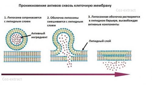 liposome_concentrate_2.jpg