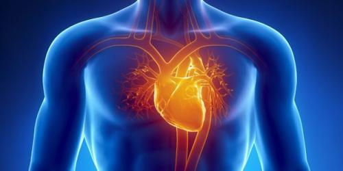 кардиолог.jpg