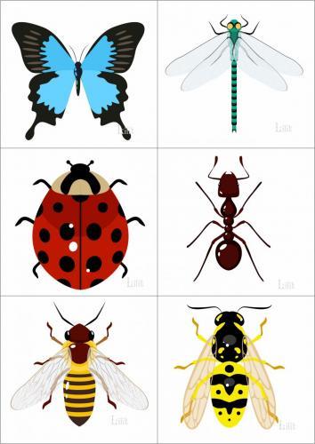 насекомые1.jpg