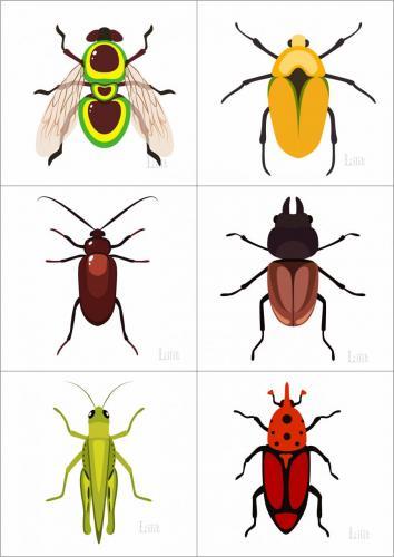 насекомые2.jpg