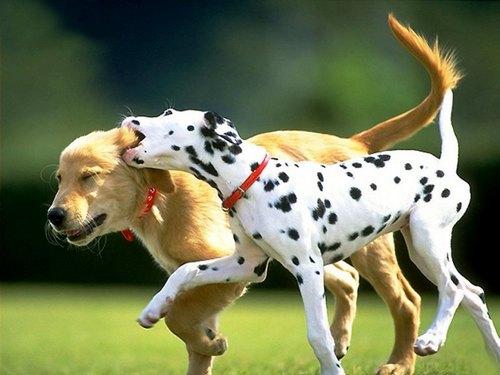 dogs_playing.jpg
