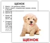 schenok_2w.jpg