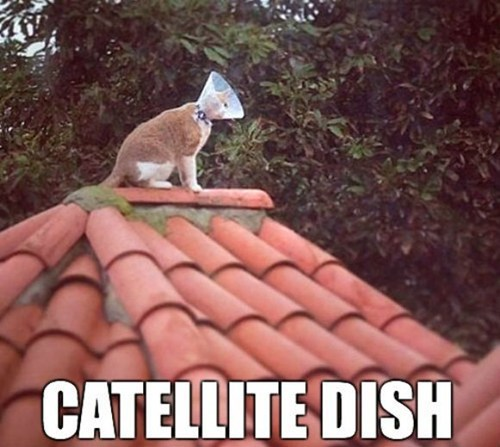 dish_cat.jpg
