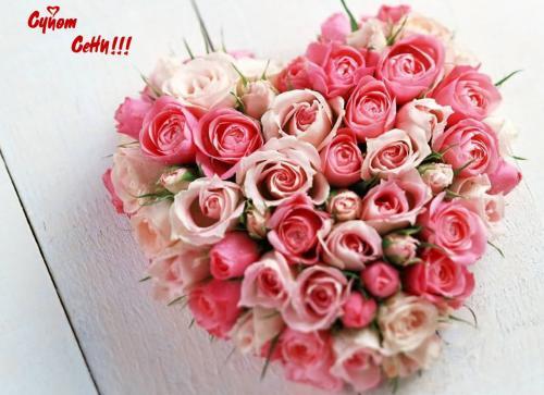 gallery_27092_88_274714.jpg