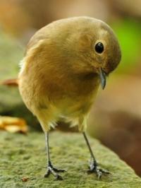 Фотография Птичка