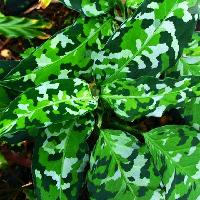 большой выбор комнатных растений - последнее сообщение от Цветы для дома