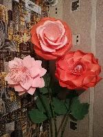 Роза из иолона  - последнее сообщение от roza.kg
